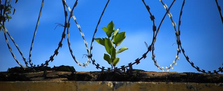 Šeimos instituto stiprinimas galėtų sumažinti įkalinimo riziką